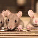 Why You Need to Keep Rodents Away From Your Cooling Systems